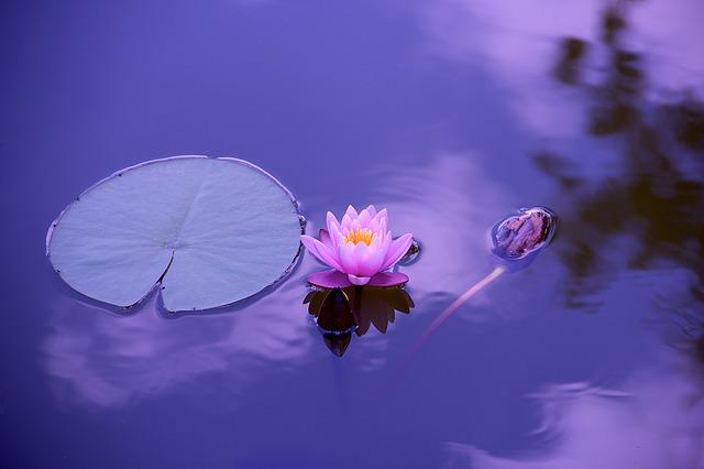 Blog lotus
