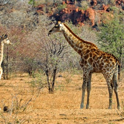 Yoga & CNV -«Maman girafe en chemin»
