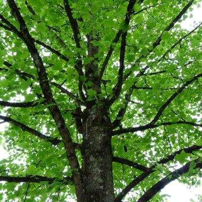 Un jour, un arbre m'a dit: